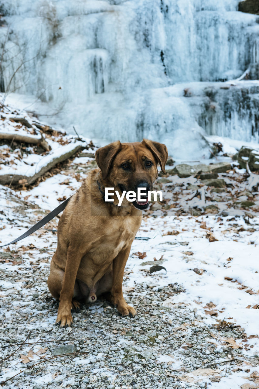 canine, one animal, dog, snow, winter, cold temperature, mammal, animal themes, pets, animal, domestic, domestic animals, portrait, day, sitting, vertebrate, nature, land, field, no people