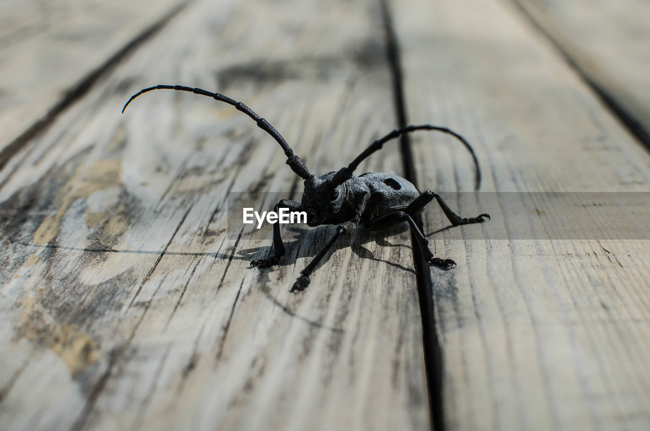 insect, invertebrate, animal themes, animal, selective focus, one animal, wood - material, animals in the wild, close-up, table, animal wildlife, no people, high angle view, arthropod, day, outdoors, textured, plank, zoology, black color