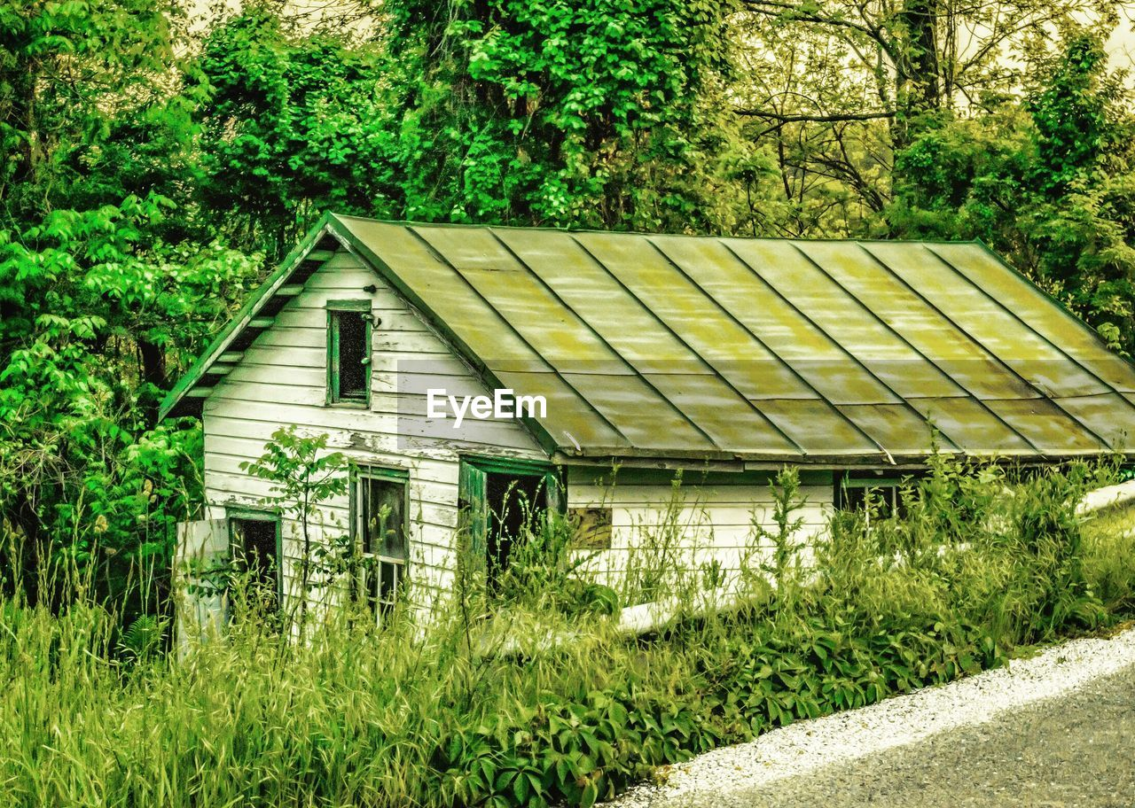 architecture, built structure, tree, building exterior, no people, house, plant, green color, day, outdoors, roof, growth, grass, nature