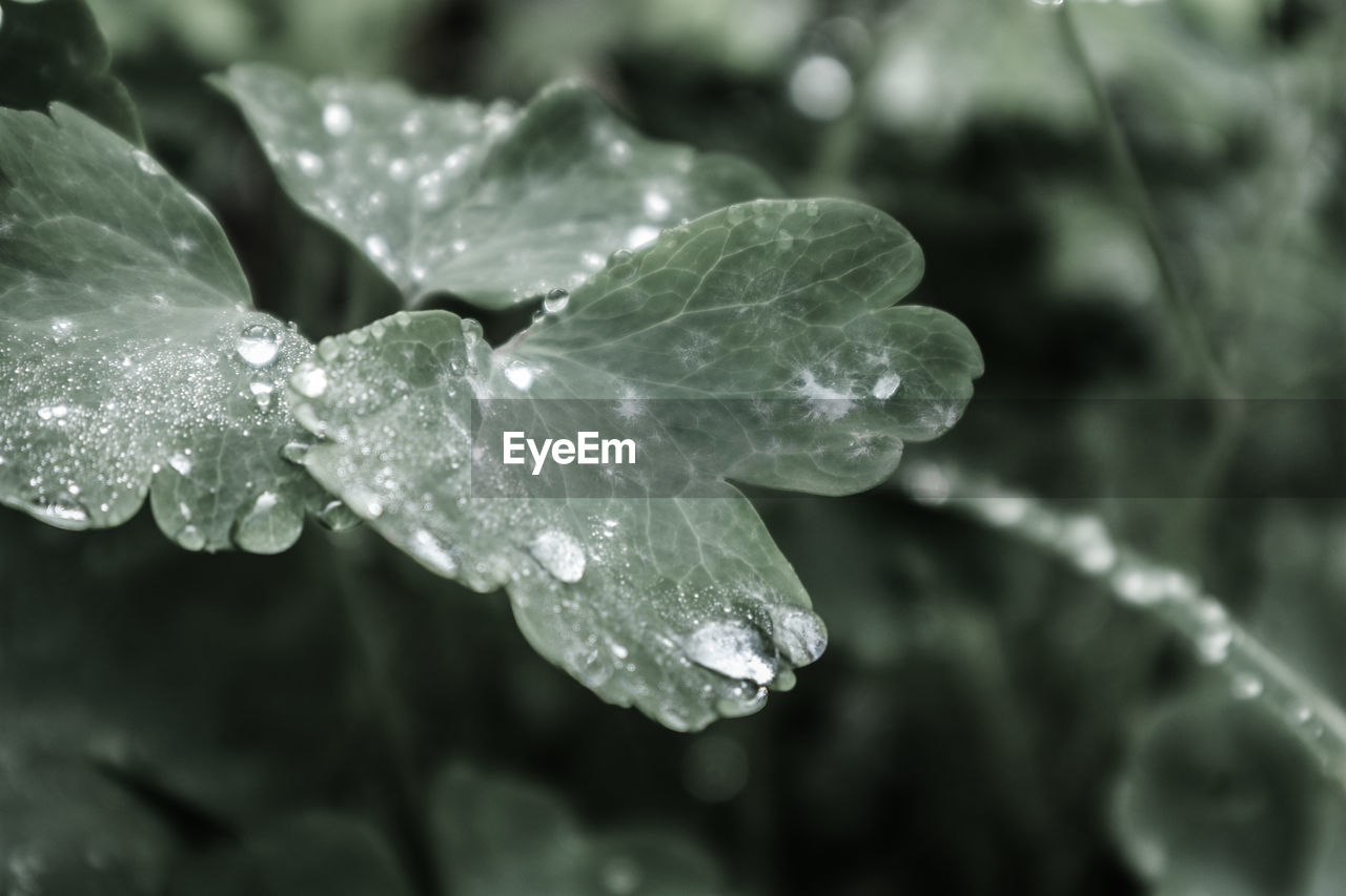 water, drop, wet, leaf, growth, nature, close-up, fragility, freshness, day, beauty in nature, raindrop, purity, no people, outdoors