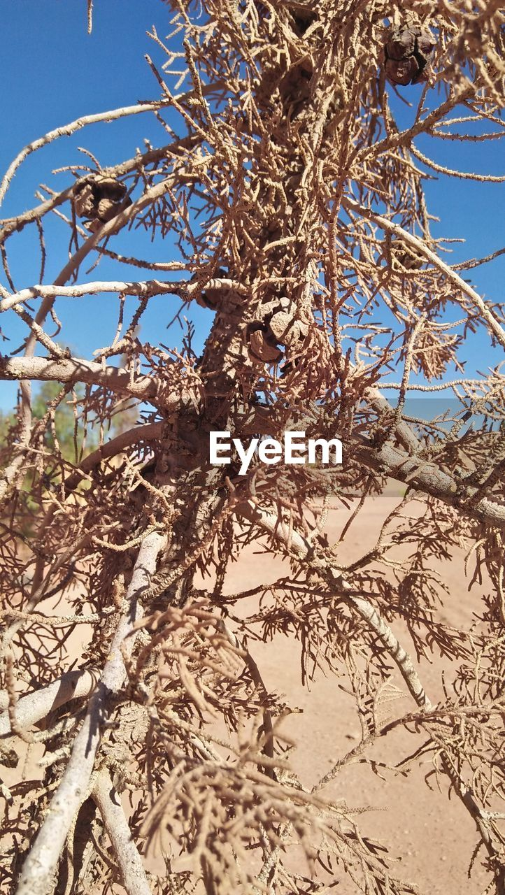 branch, tree, nature, day, low angle view, no people, outdoors, growth, bare tree, sunlight, plant, dead plant, dried plant, beauty in nature, close-up, clear sky, sky