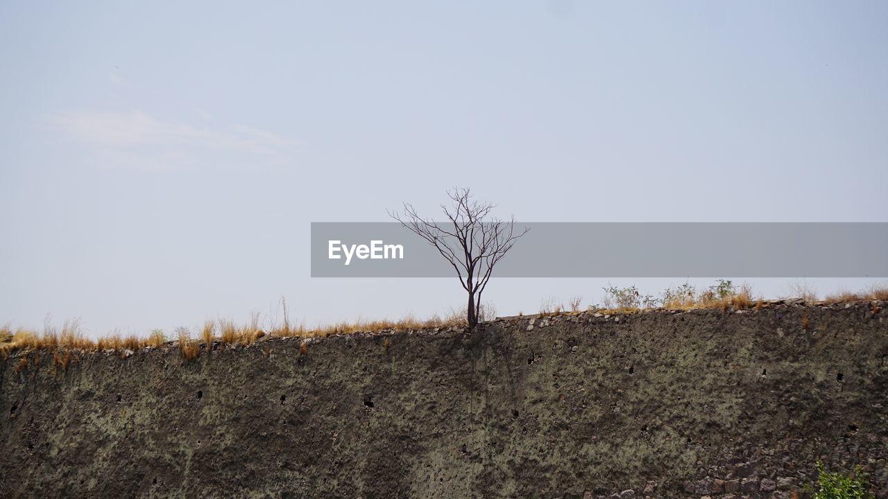 Bare tree on golkonda fort hyderabad