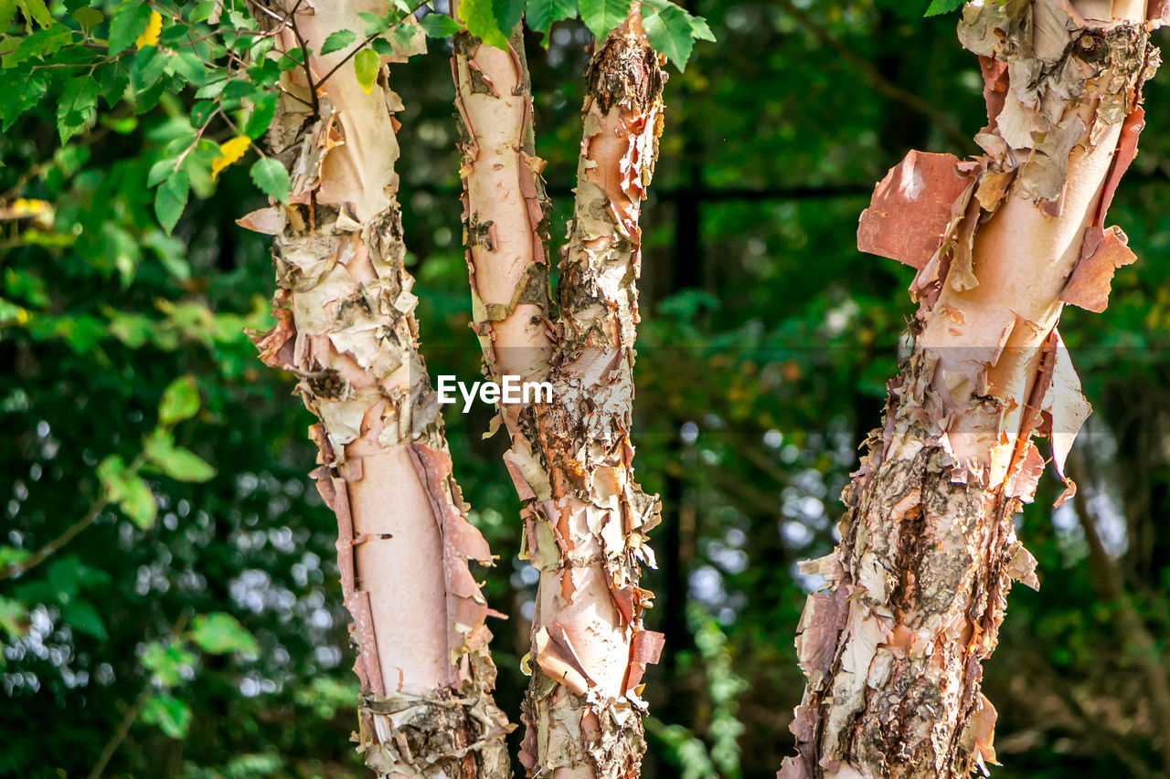 tree trunk, tree, nature, day, focus on foreground, no people, growth, close-up, outdoors, forest, fungus, beauty in nature