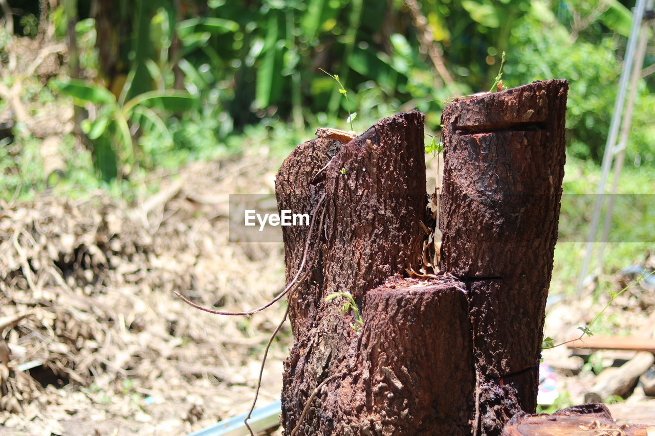 focus on foreground, tree, day, plant, nature, forest, land, no people, close-up, wood, wood - material, bark, outdoors, tree stump, tree trunk, sunlight, trunk, growth, field, log