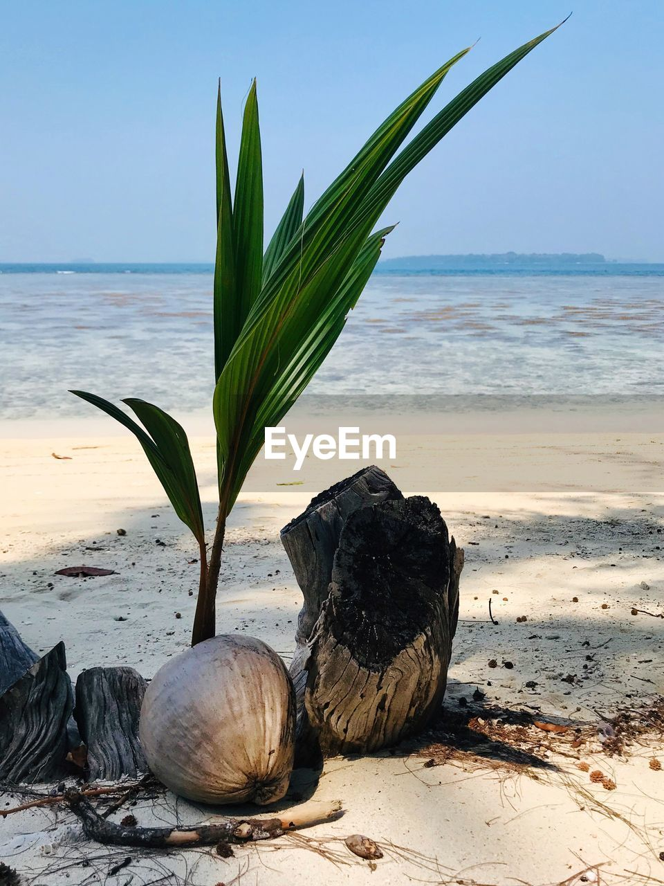 beach, sea, land, water, horizon over water, horizon, beauty in nature, nature, sand, sky, no people, scenics - nature, day, tranquility, tranquil scene, plant, shell, focus on foreground, leaf, outdoors