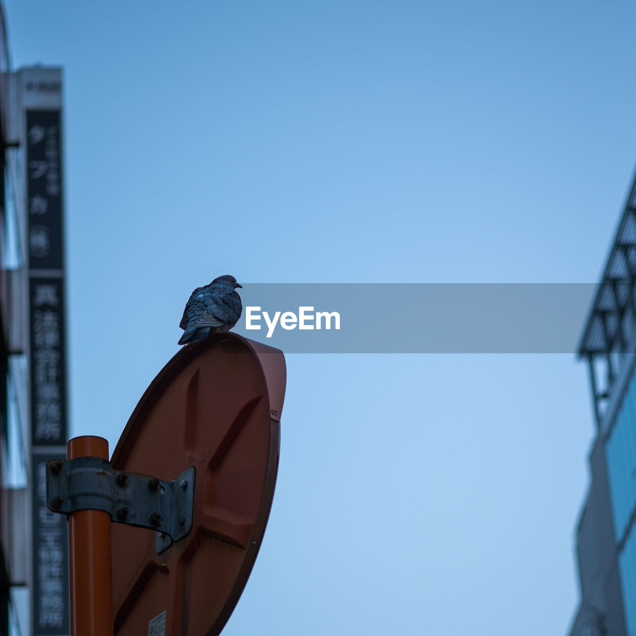 Low angle view of pigeon perching on traffic mirror against clear sky
