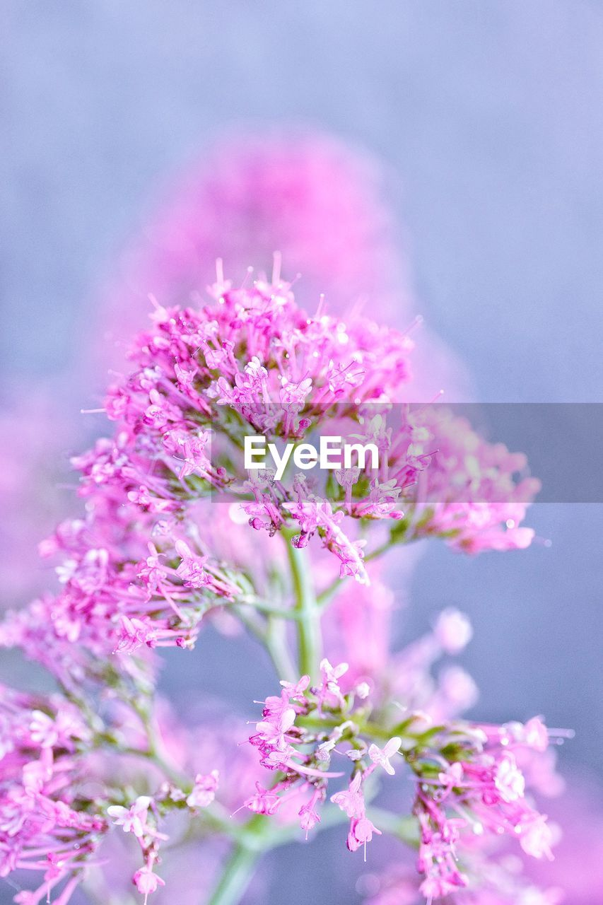 flower, pink color, fragility, growth, nature, beauty in nature, freshness, blossom, petal, no people, close-up, plant, blooming, outdoors, day, flower head