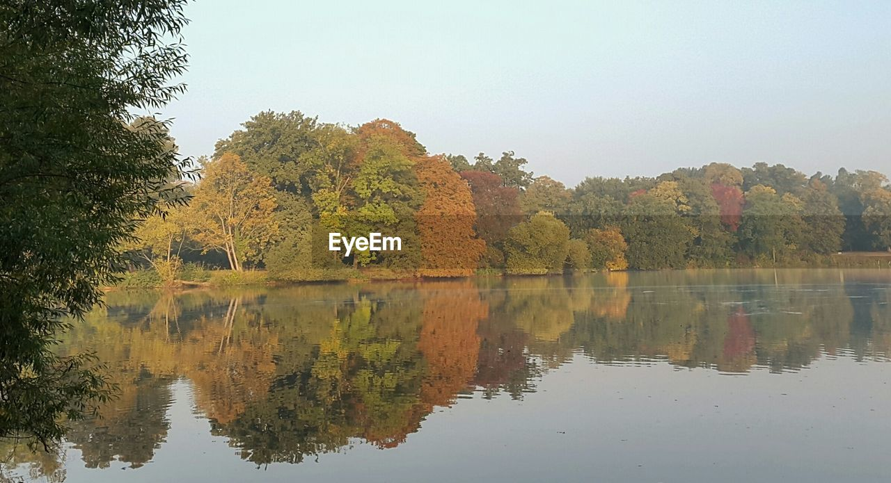tree, autumn, reflection, change, water, nature, tranquil scene, beauty in nature, lake, scenics, tranquility, leaf, no people, outdoors, day, growth, waterfront, clear sky, sky
