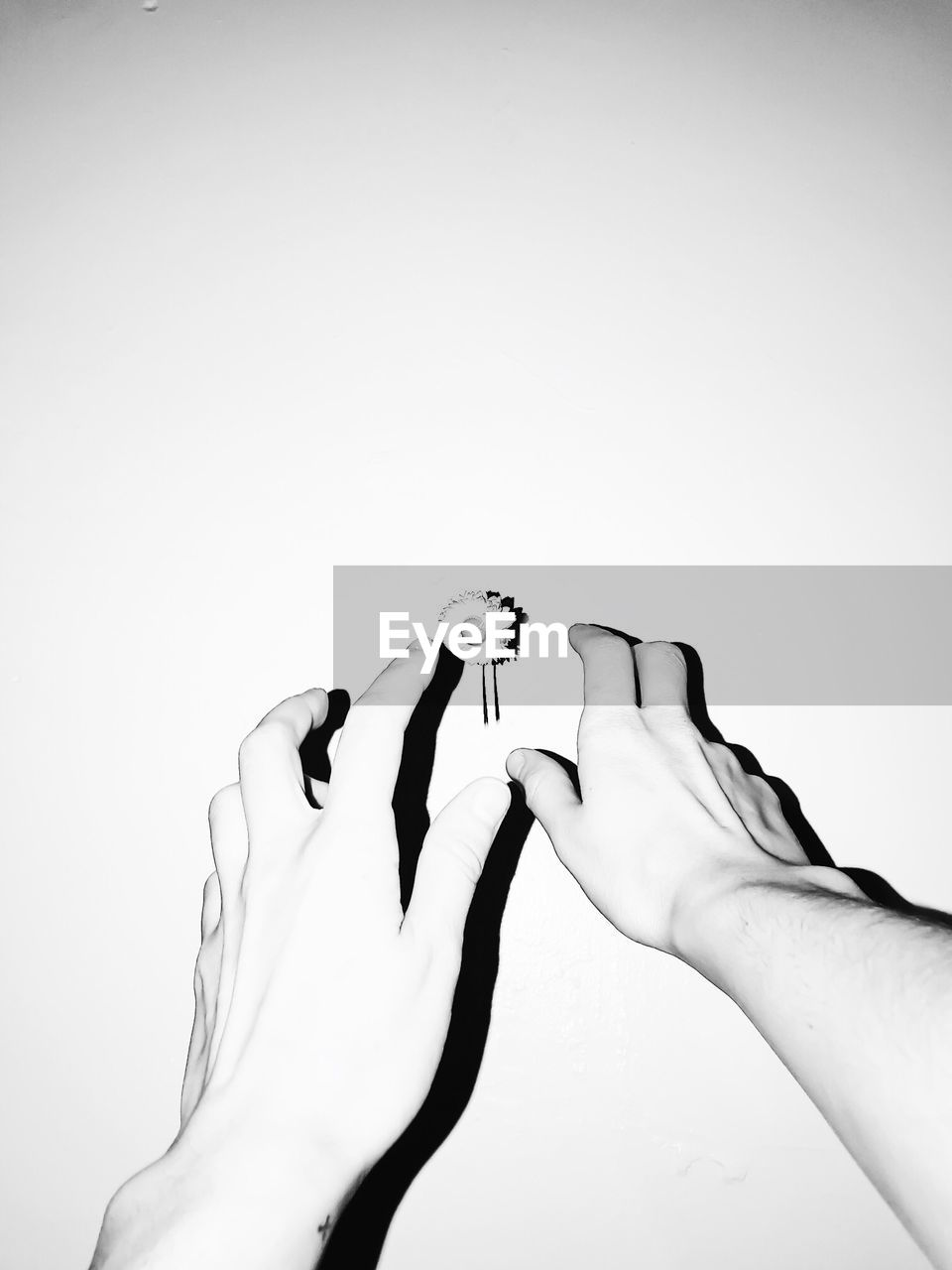 Cropped Image Of Hands Reaching Flower Against White Background