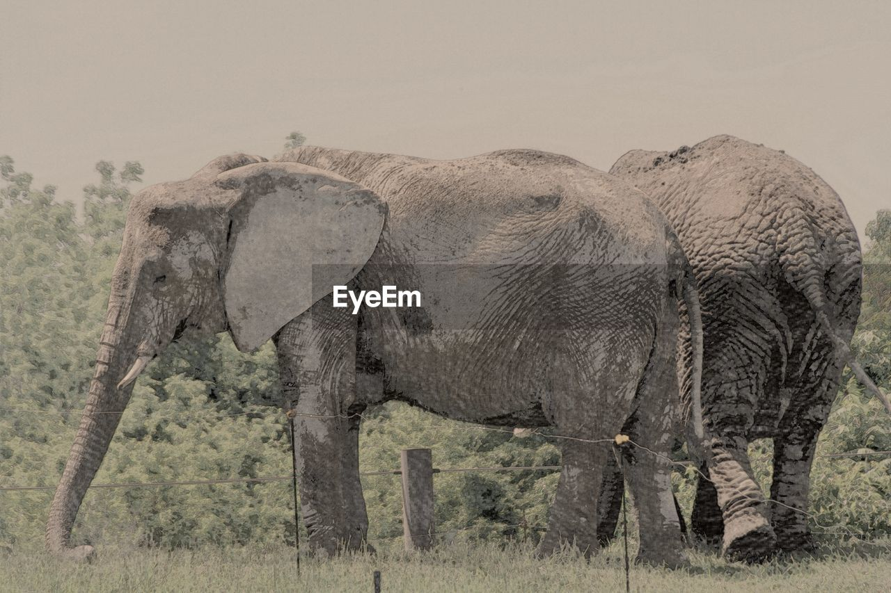 elephant, animals in the wild, nature, african elephant, landscape, safari animals, no people, animal wildlife, outdoors, side view, animal themes, day, mammal, beauty in nature, tusk, grass, animal trunk, elephant calf, sky