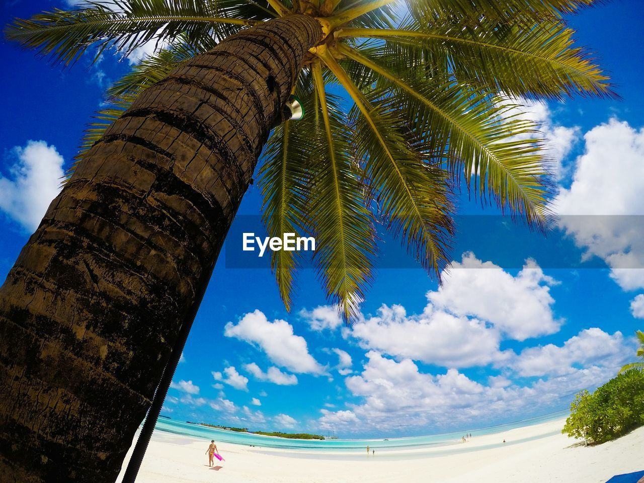 sky, palm tree, blue, tree, cloud - sky, nature, beauty in nature, day, no people, outdoors, close-up