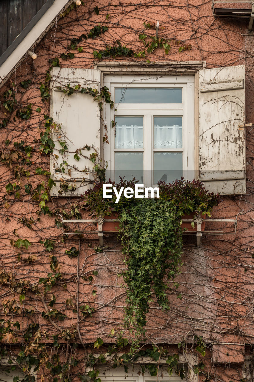 architecture, built structure, building exterior, building, window, plant, house, growth, day, no people, residential district, creeper plant, nature, wall, wall - building feature, ivy, outdoors, entrance, door, potted plant, brick, apartment