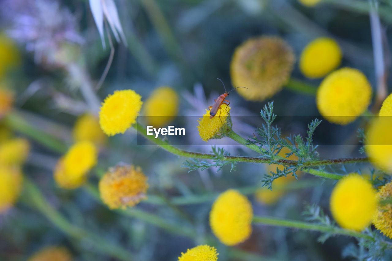 plant, growth, selective focus, freshness, yellow, close-up, beauty in nature, flower, day, flowering plant, fragility, nature, vulnerability, no people, outdoors, focus on foreground, green color, beginnings, inflorescence, botany, flower head