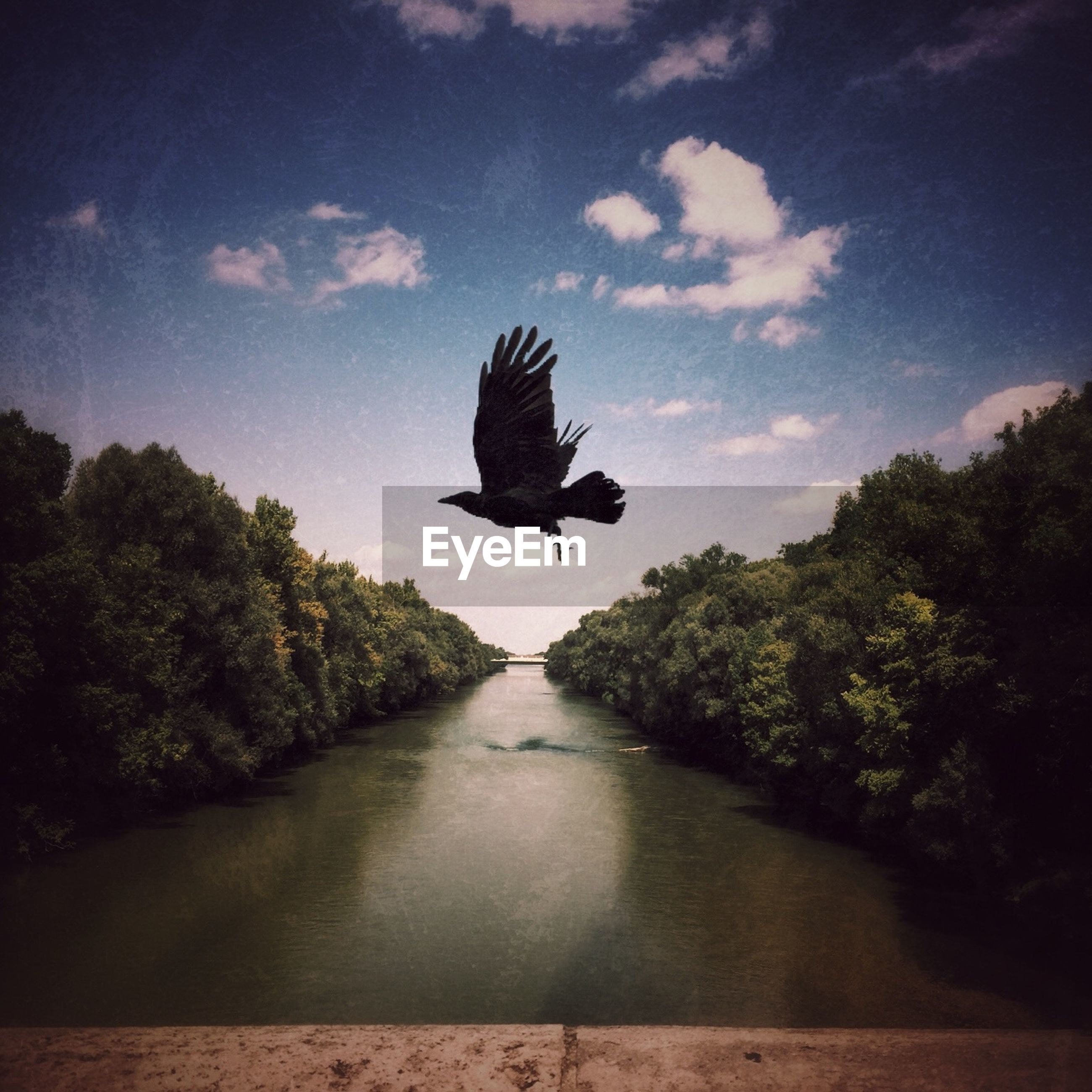 Bird flying over river amidst trees against sky