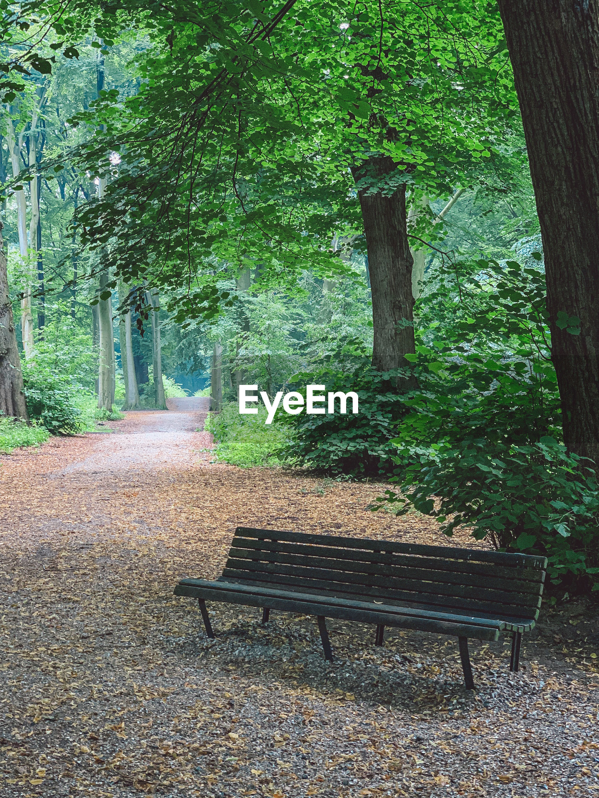 Empty bench by trees in park