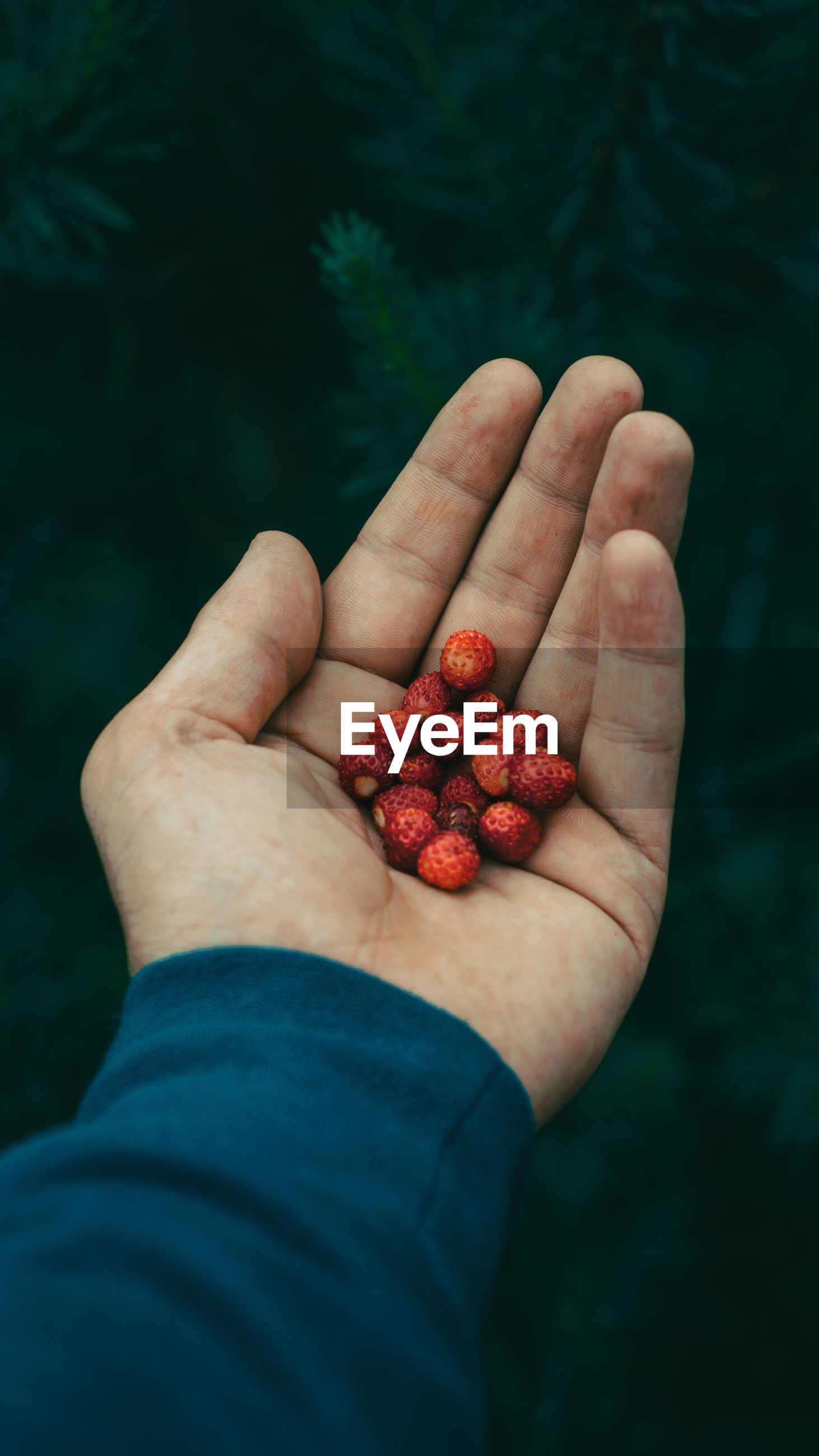 Cropped hand holding berries