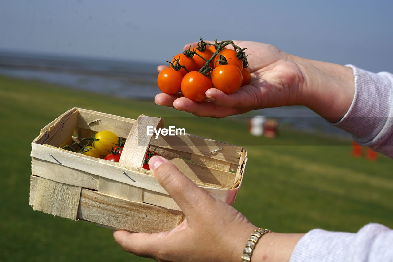 Midsection of person holding basket and tomatoes