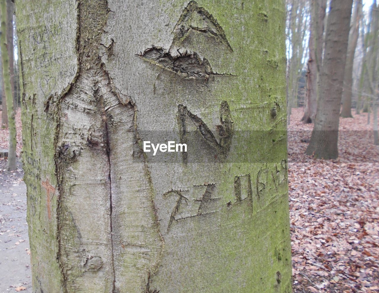 tree trunk, tree, day, no people, outdoors, close-up, wood - material, textured, nature, growth