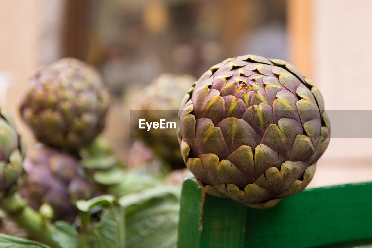 food and drink, artichoke, food, healthy eating, wellbeing, freshness, vegetable, close-up, green color, no people, focus on foreground, raw food, still life, organic, pattern, day, indoors, bud, selective focus, growth, purple, vegetarian food