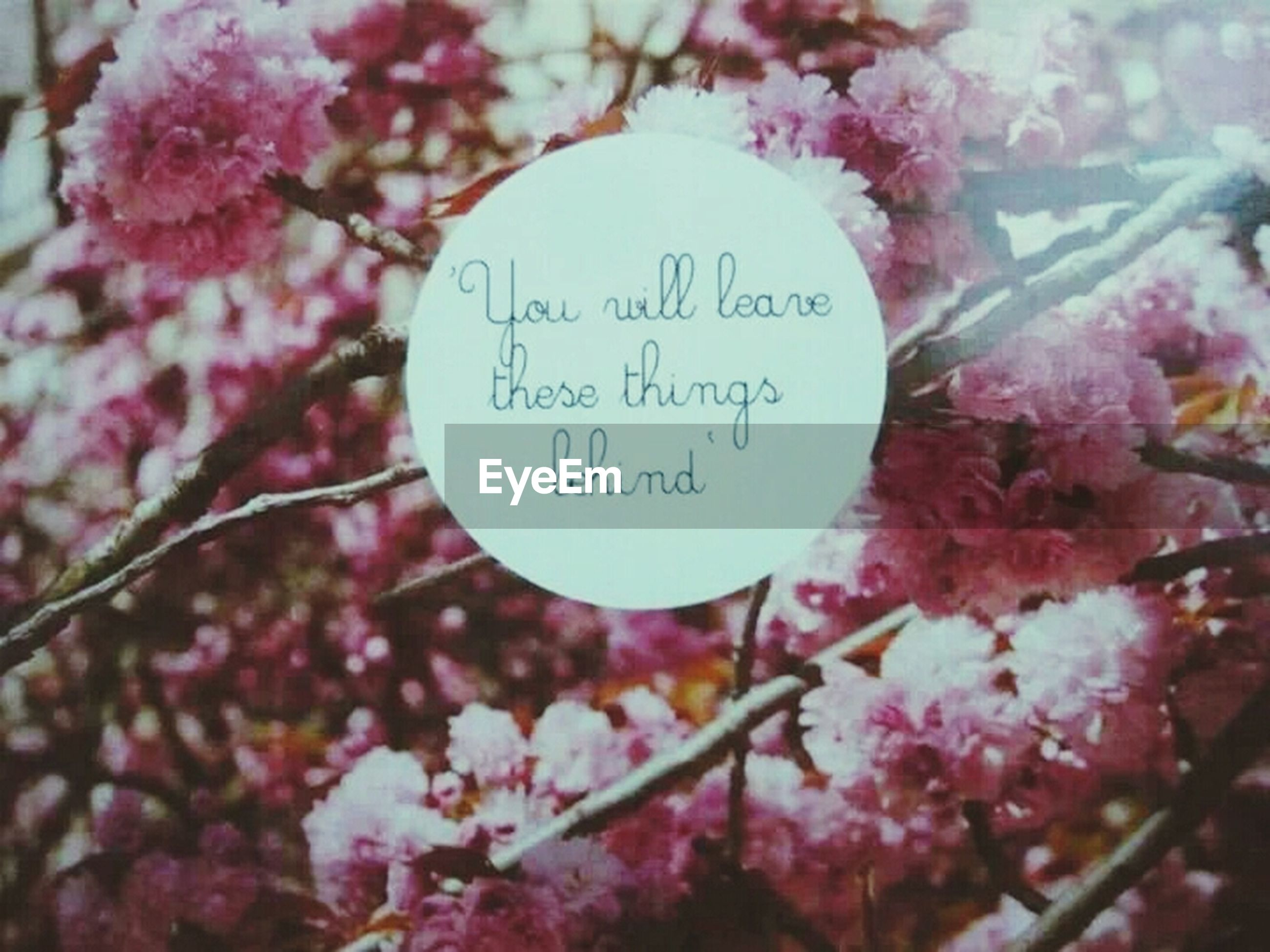 flower, tree, text, branch, growth, freshness, close-up, pink color, focus on foreground, western script, nature, communication, beauty in nature, fragility, cherry tree, red, day, no people, leaf, selective focus