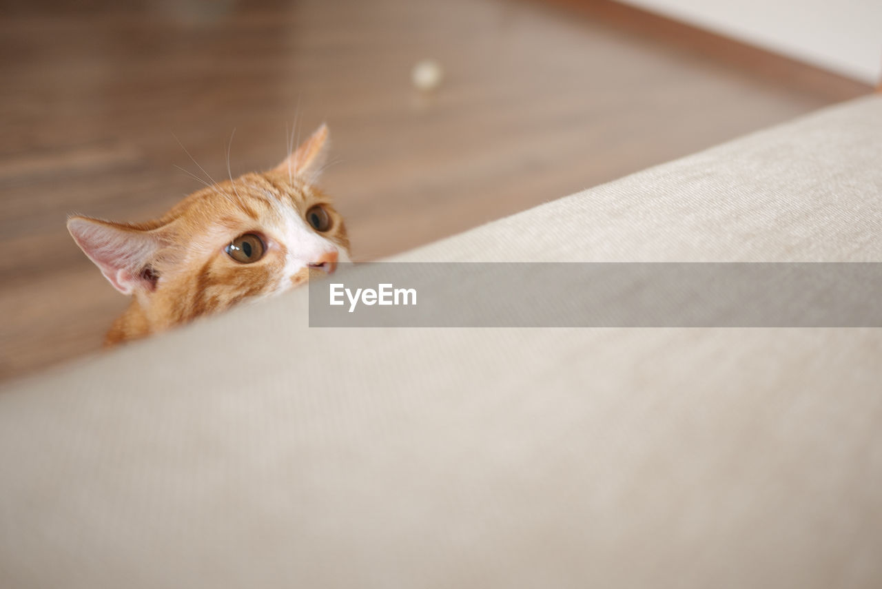 High angle view of cat by table