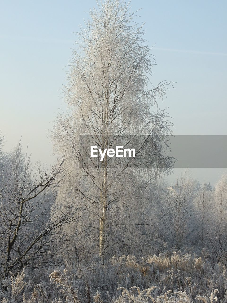 bare tree, winter, tree, cold temperature, nature, snow, tranquility, beauty in nature, day, branch, outdoors, landscape, no people, tranquil scene, clear sky, scenics, sky