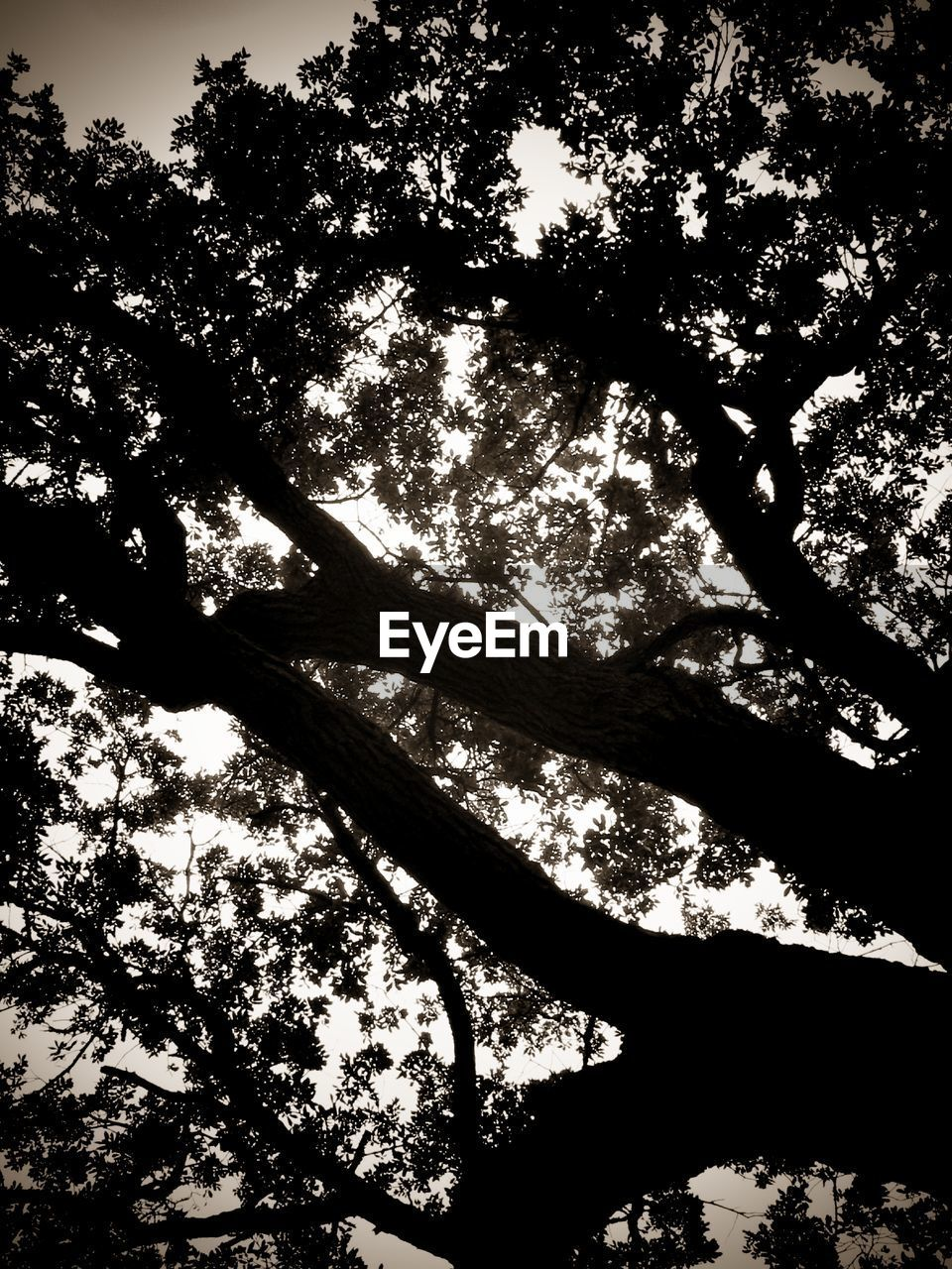 tree, nature, growth, low angle view, branch, no people, tree trunk, day, outdoors, beauty in nature, sky