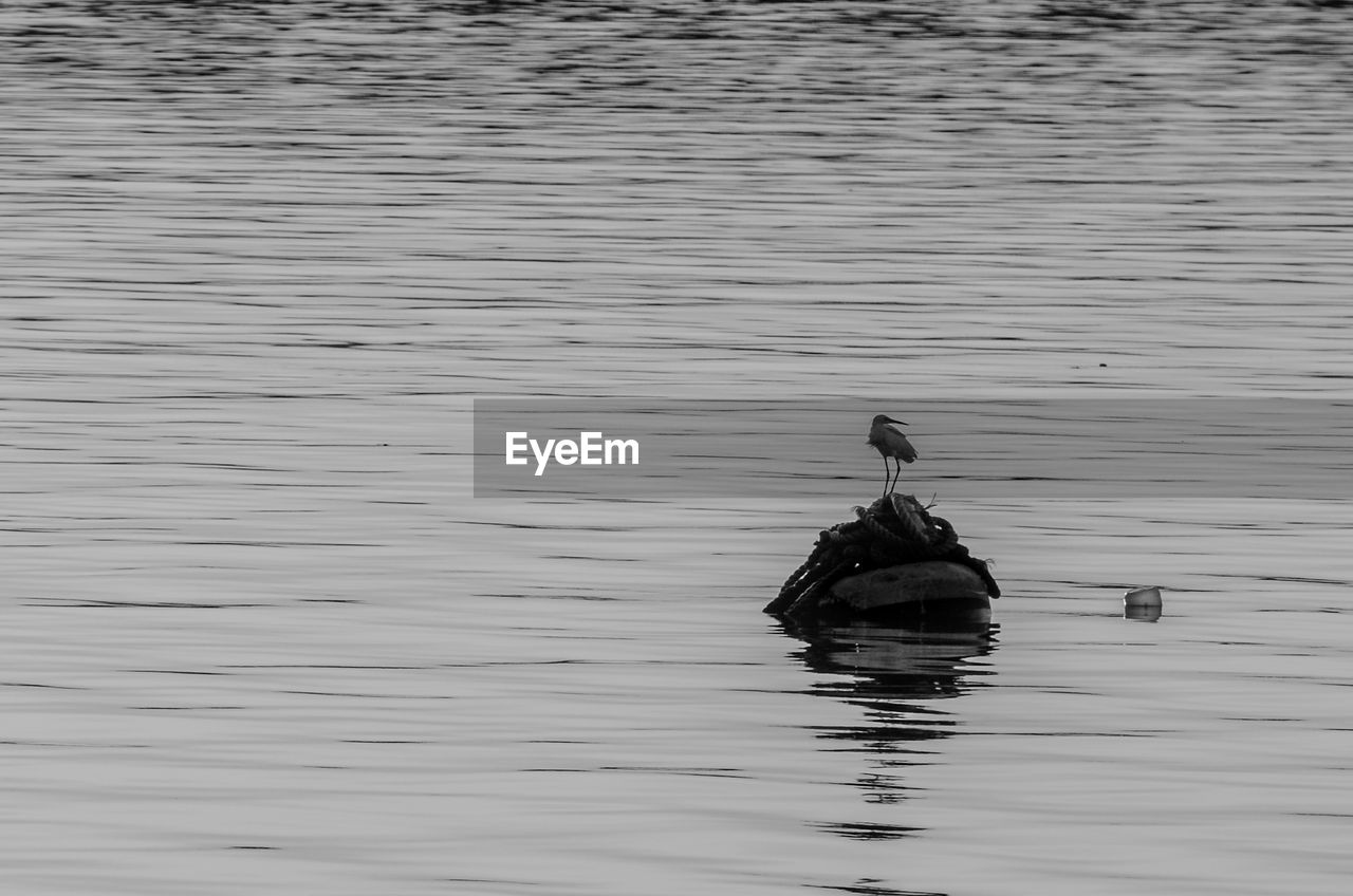 water, waterfront, lake, swimming, animals in the wild, nature, animal themes, outdoors, animal wildlife, no people, one animal, day, floating in water, bird