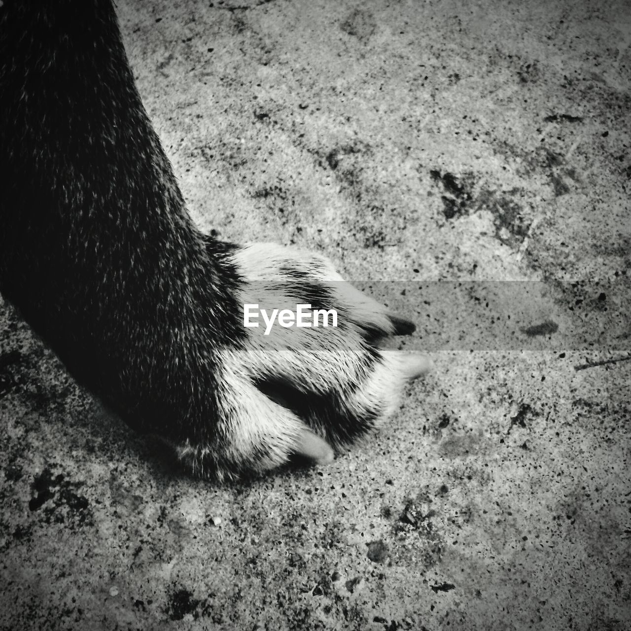one animal, animal themes, dog, domestic animals, mammal, sand, pets, day, nature, no people, close-up, outdoors