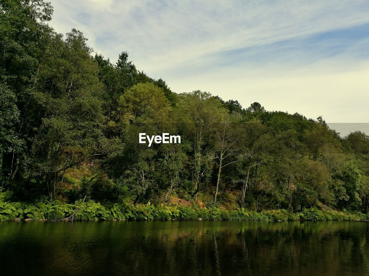 tree, nature, lake, flora, growth, forest, water, landscape, no people, sky, beauty in nature, outdoors, scenery