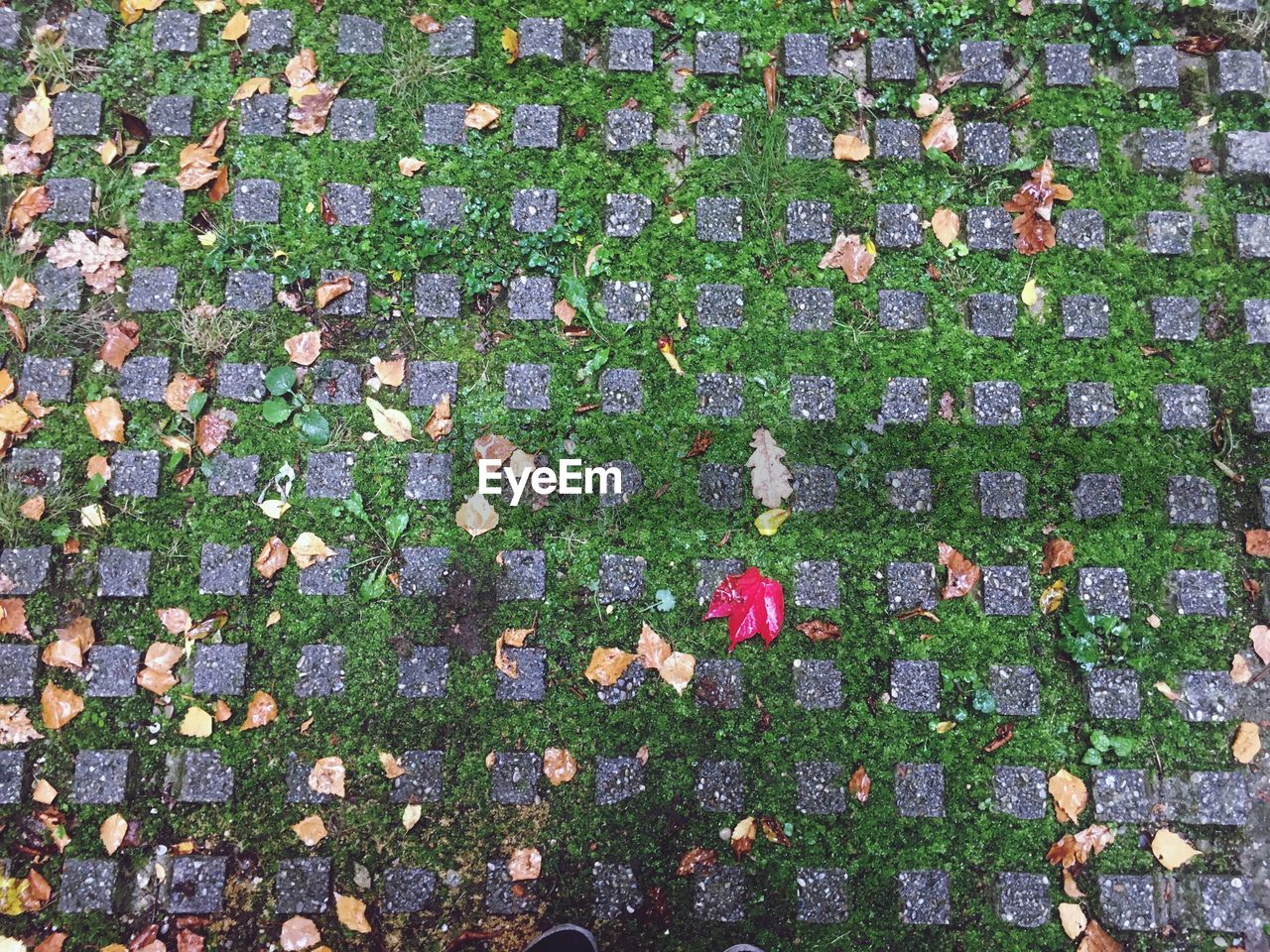 High Angle View Of Flowering Plants During Autumn