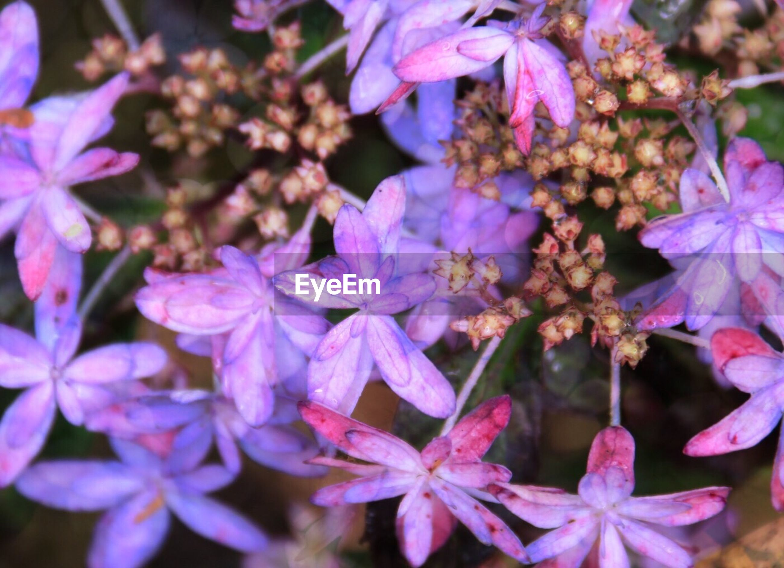 flower, freshness, purple, growth, fragility, petal, close-up, beauty in nature, nature, plant, flower head, focus on foreground, blooming, pink color, selective focus, backgrounds, abundance, full frame, outdoors, day