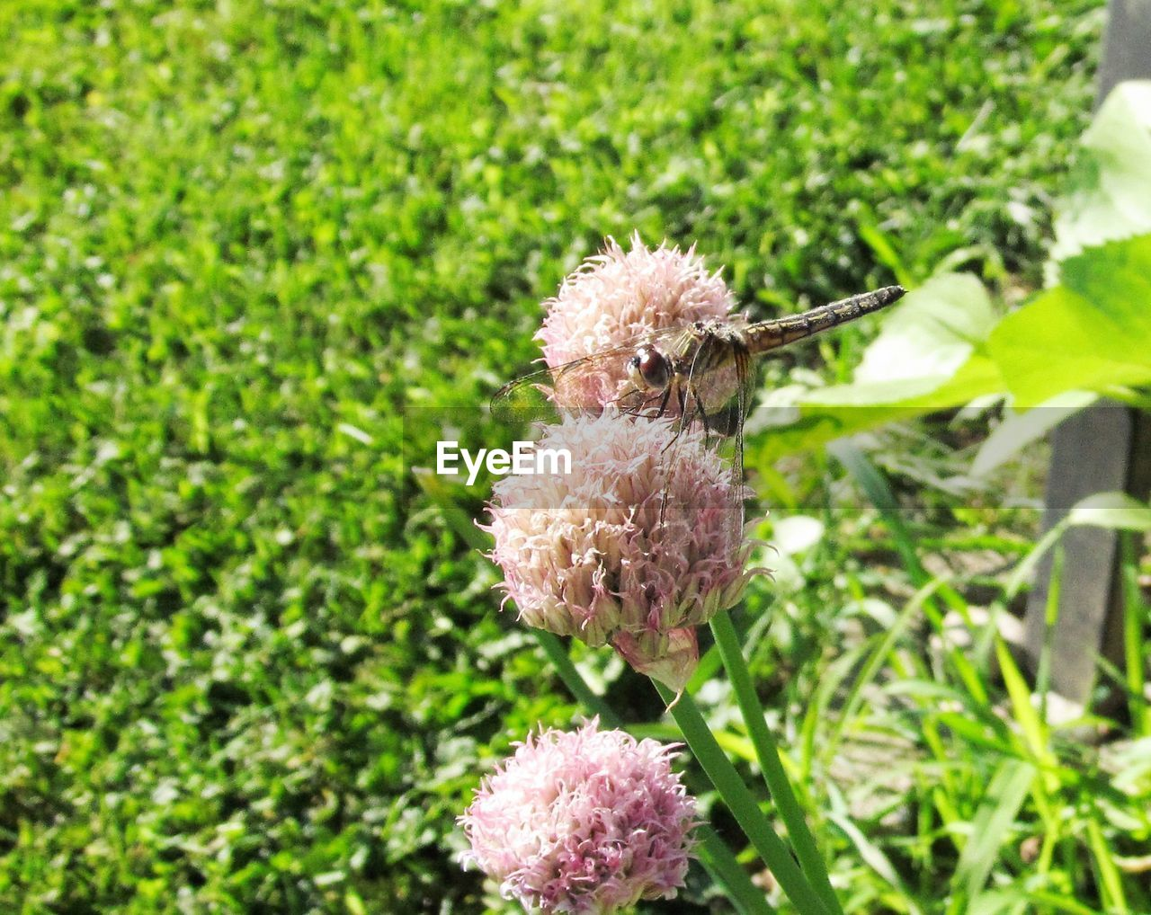 growth, nature, plant, green color, flower, beauty in nature, no people, day, field, outdoors, fragility, flower head, freshness, grass, close-up