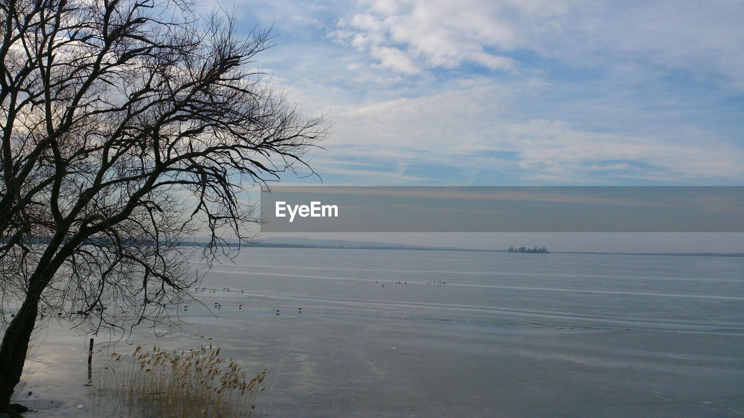 tranquility, sky, water, tranquil scene, tree, scenics, beauty in nature, bare tree, sea, nature, cloud - sky, branch, horizon over water, cloud, idyllic, cloudy, non-urban scene, beach, shore, lake
