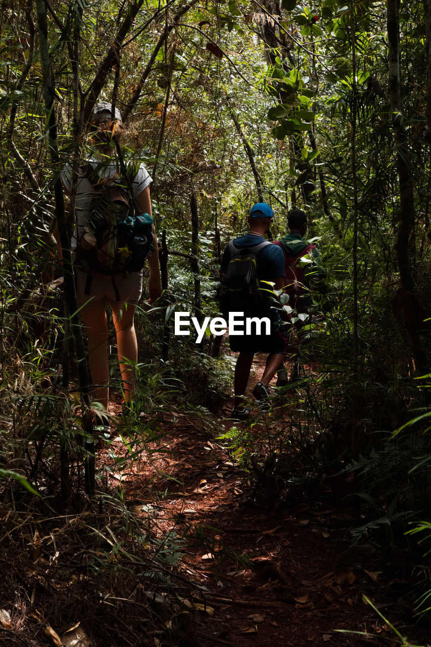 tree, forest, plant, land, rear view, real people, group of people, walking, leisure activity, growth, hiking, nature, full length, people, lifestyles, day, adventure, backpack, men, activity, woodland, outdoors