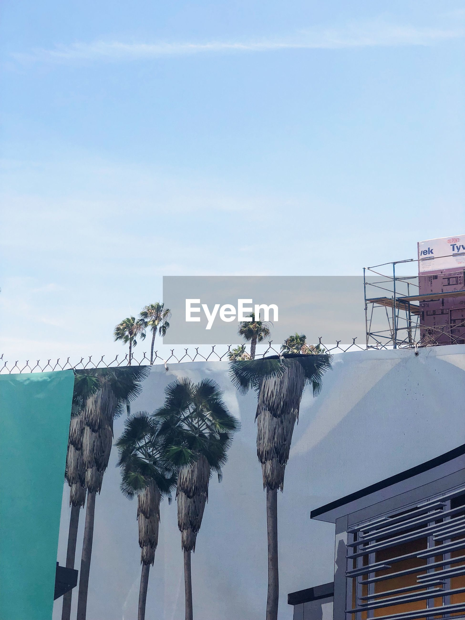 LOW ANGLE VIEW OF PALM TREES ON BUILDING AGAINST SKY