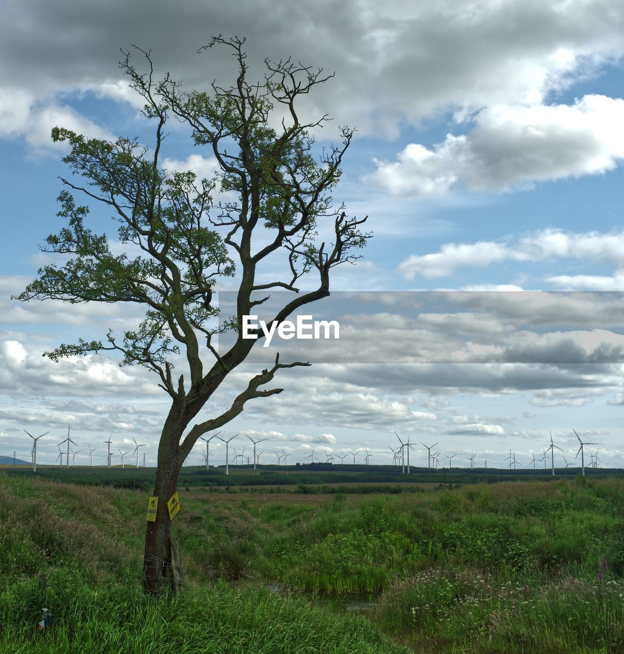 cloud - sky, sky, plant, environment, landscape, beauty in nature, land, tranquility, nature, tranquil scene, field, scenics - nature, non-urban scene, tree, grass, day, no people, fuel and power generation, growth, wind turbine, outdoors