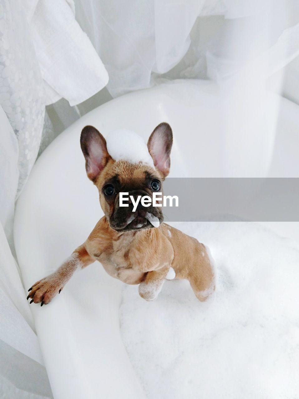 Dog In The Bathtub