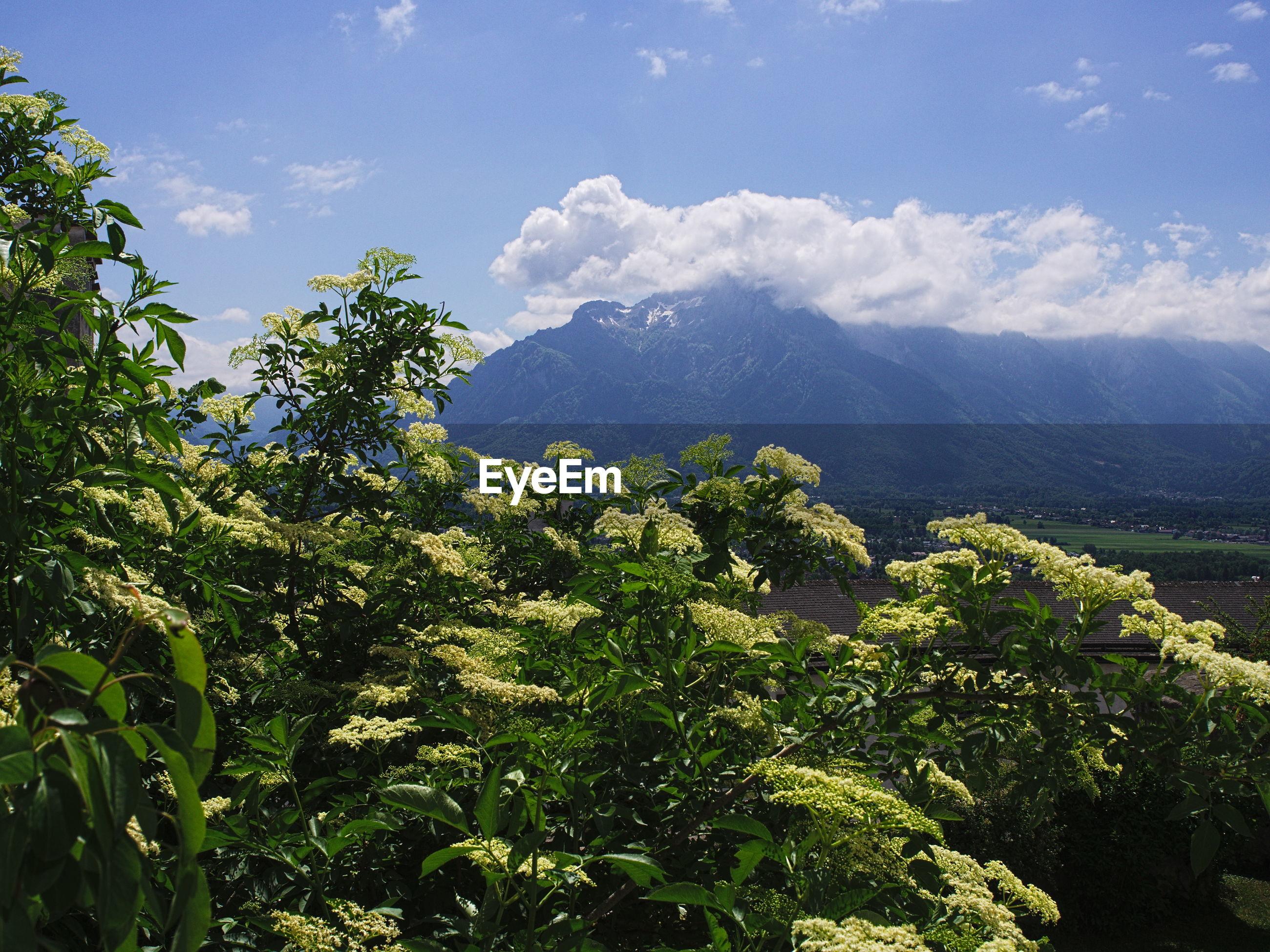 TREES AGAINST MOUNTAIN RANGE