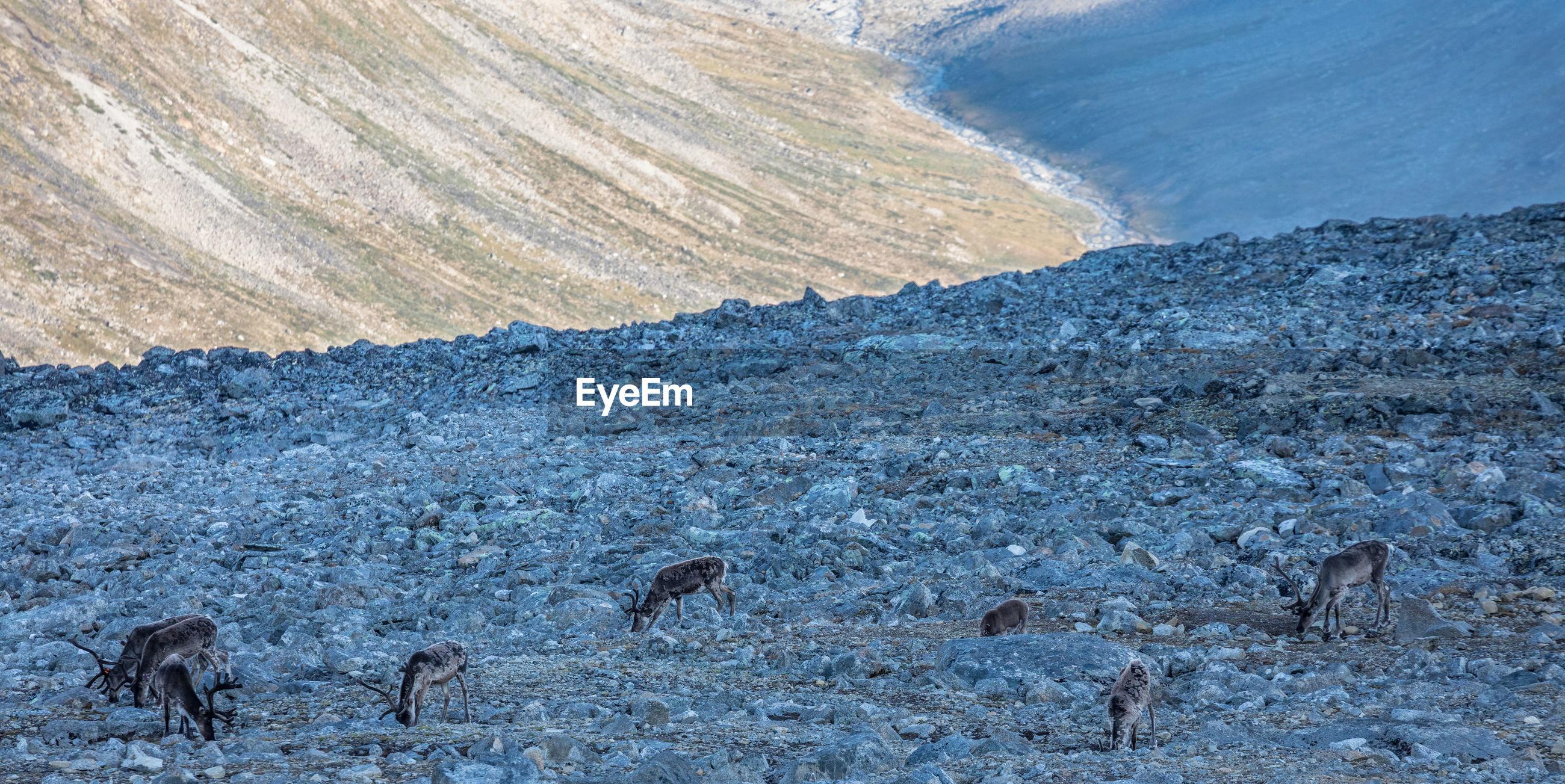 Deer on rocks