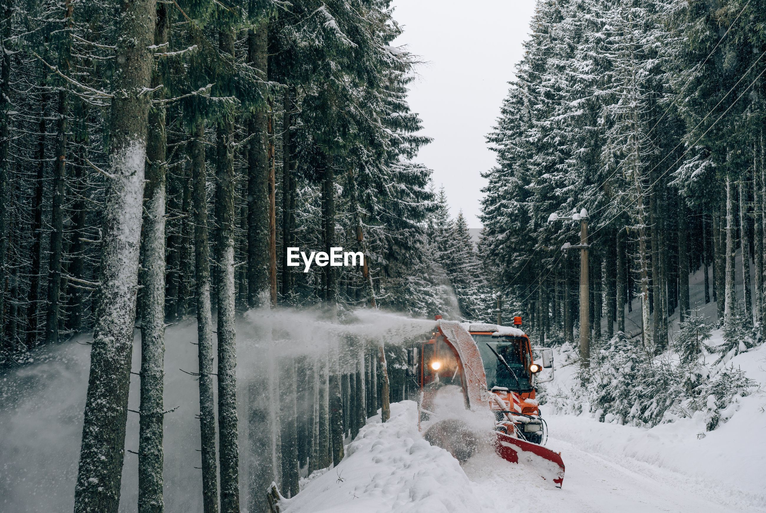 Vehicle amidst trees during winter at forest