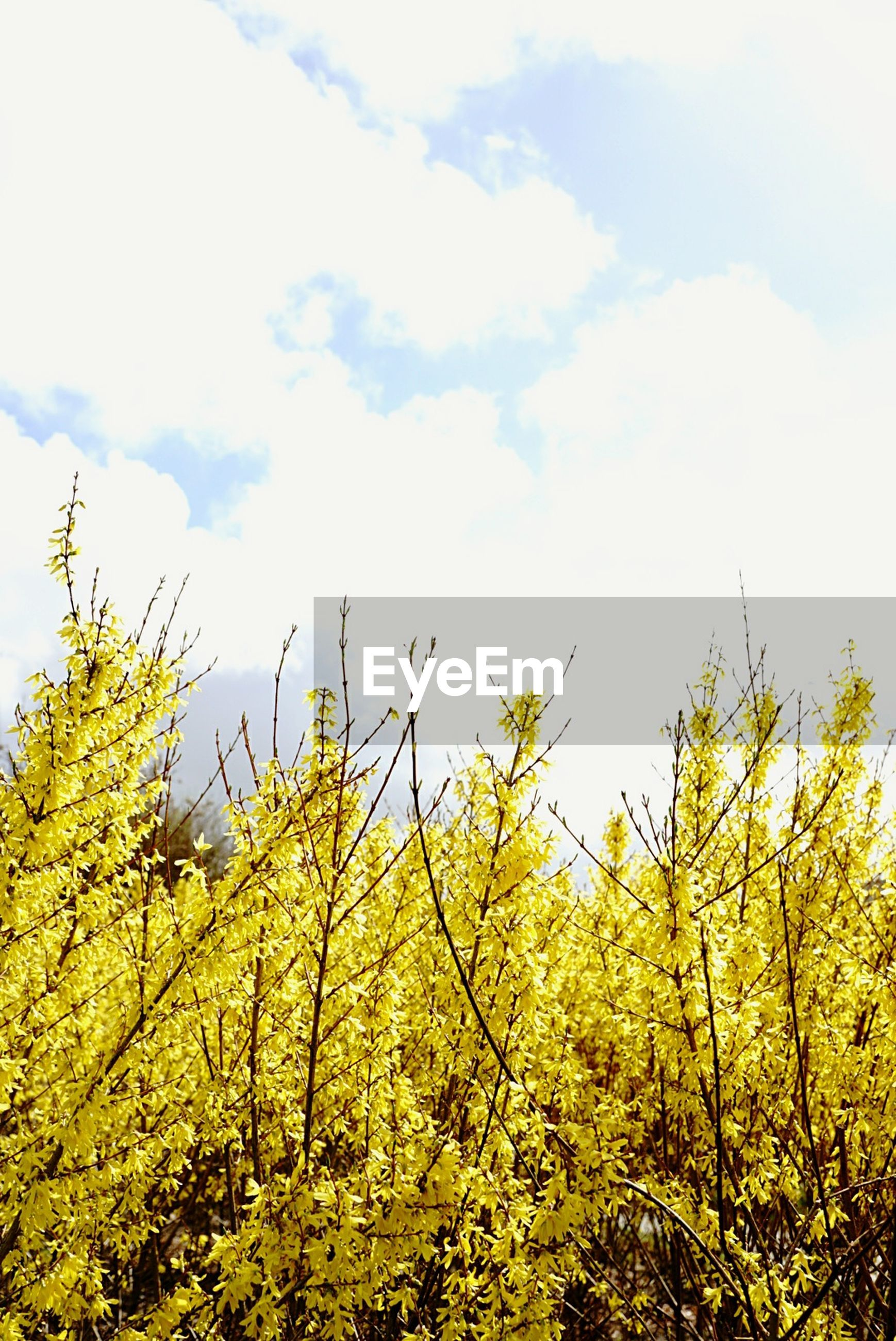 LOW ANGLE VIEW OF YELLOW TREE