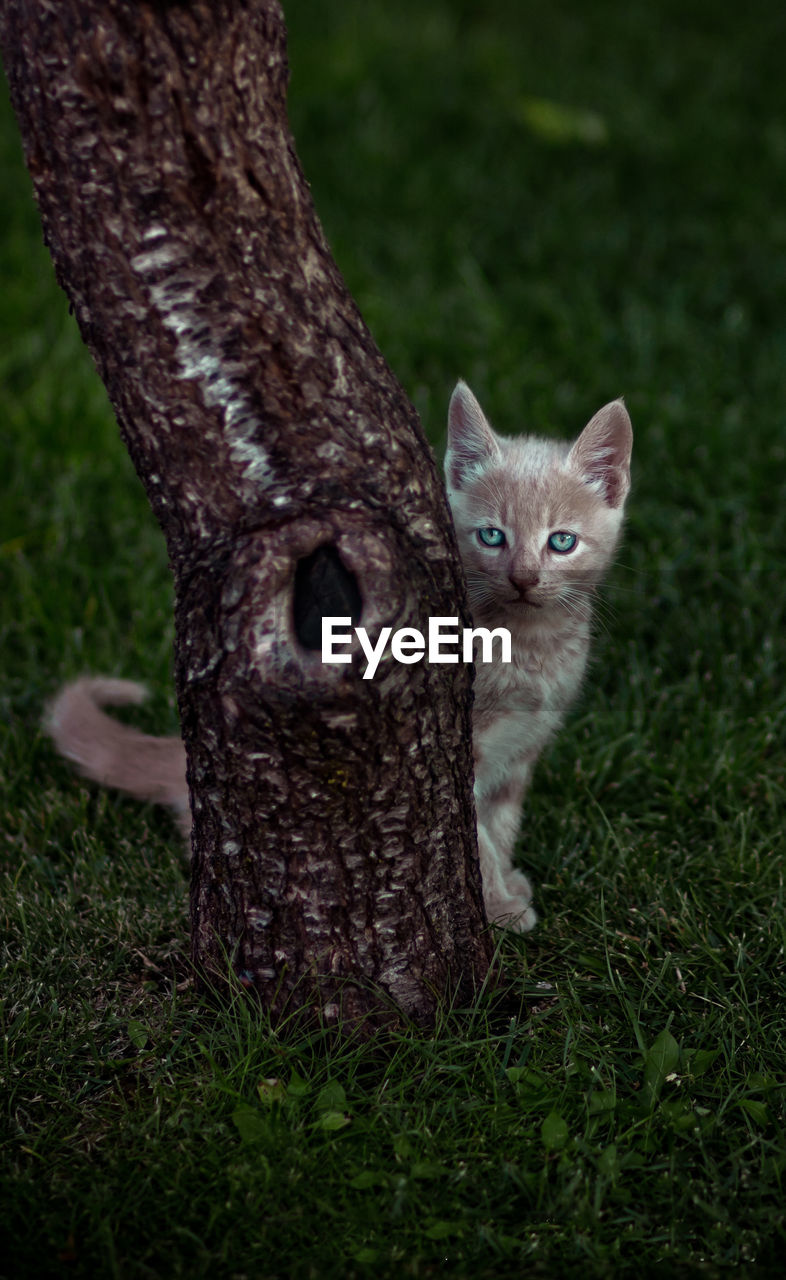 one animal, animal themes, animal, mammal, plant, domestic, pets, grass, cat, domestic animals, portrait, feline, nature, vertebrate, looking at camera, no people, land, day, tree, domestic cat, animal head, whisker