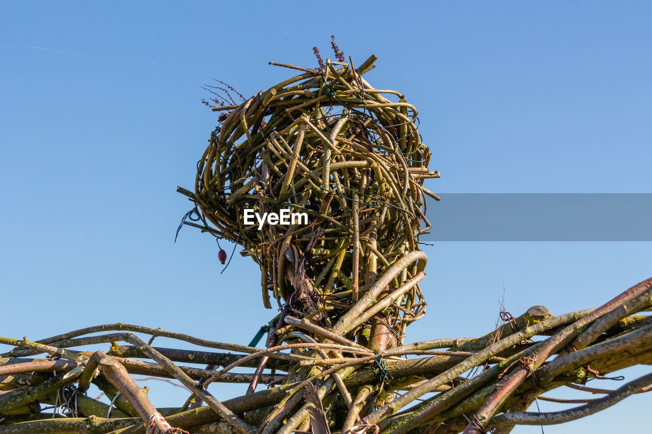 sky, low angle view, clear sky, plant, nature, no people, tree, day, animal nest, branch, blue, copy space, outdoors, bird, sunlight, bird nest, growth, metal, vertebrate, twig, tangled