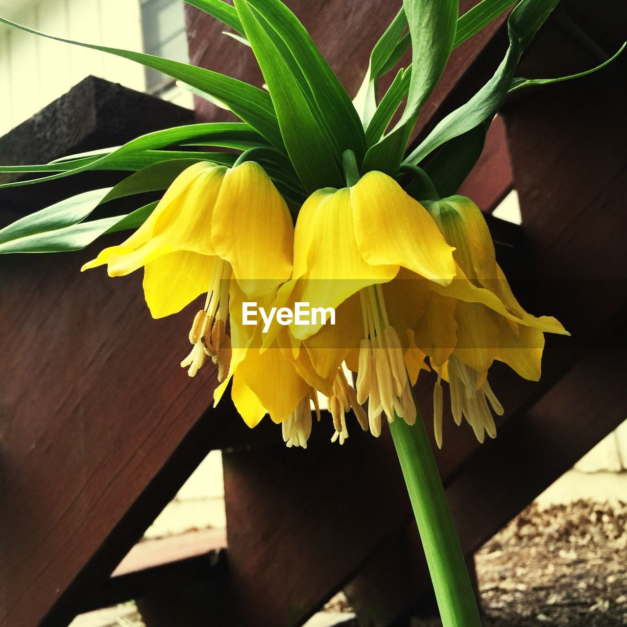 flower, yellow, freshness, fragility, petal, growth, beauty in nature, nature, day, plant, close-up, no people, flower head, springtime, outdoors, blooming