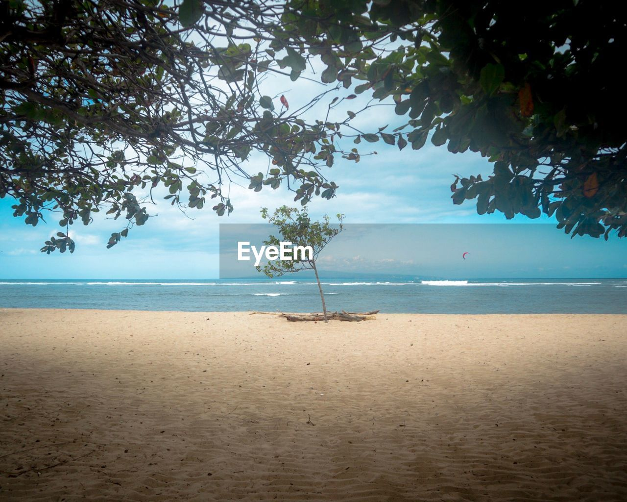 sea, water, tree, beauty in nature, beach, sky, land, scenics - nature, plant, tranquility, tranquil scene, horizon, horizon over water, sand, nature, day, idyllic, outdoors, cloud - sky, no people