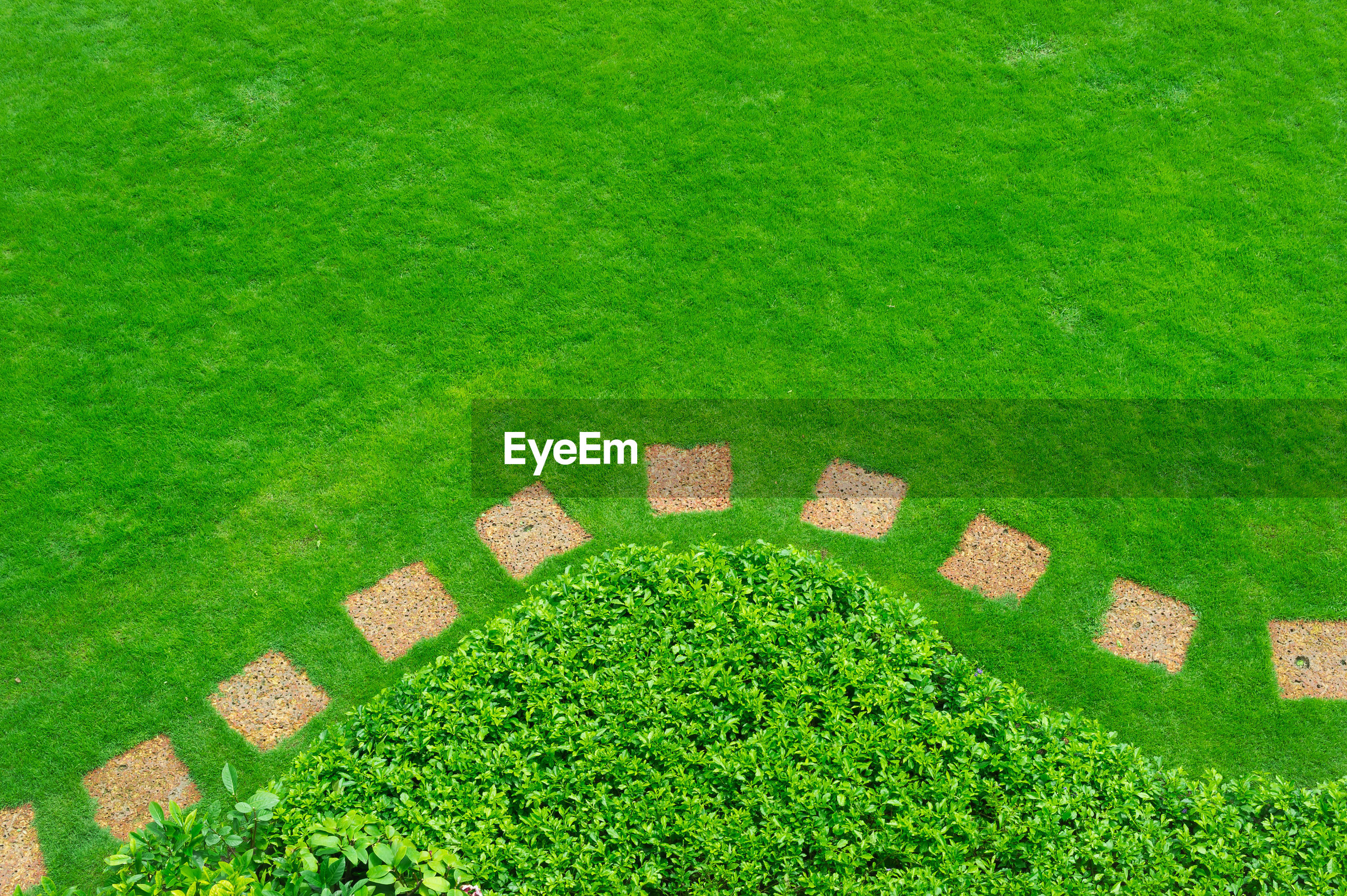High angle view of stepping stones and grassy field in garden