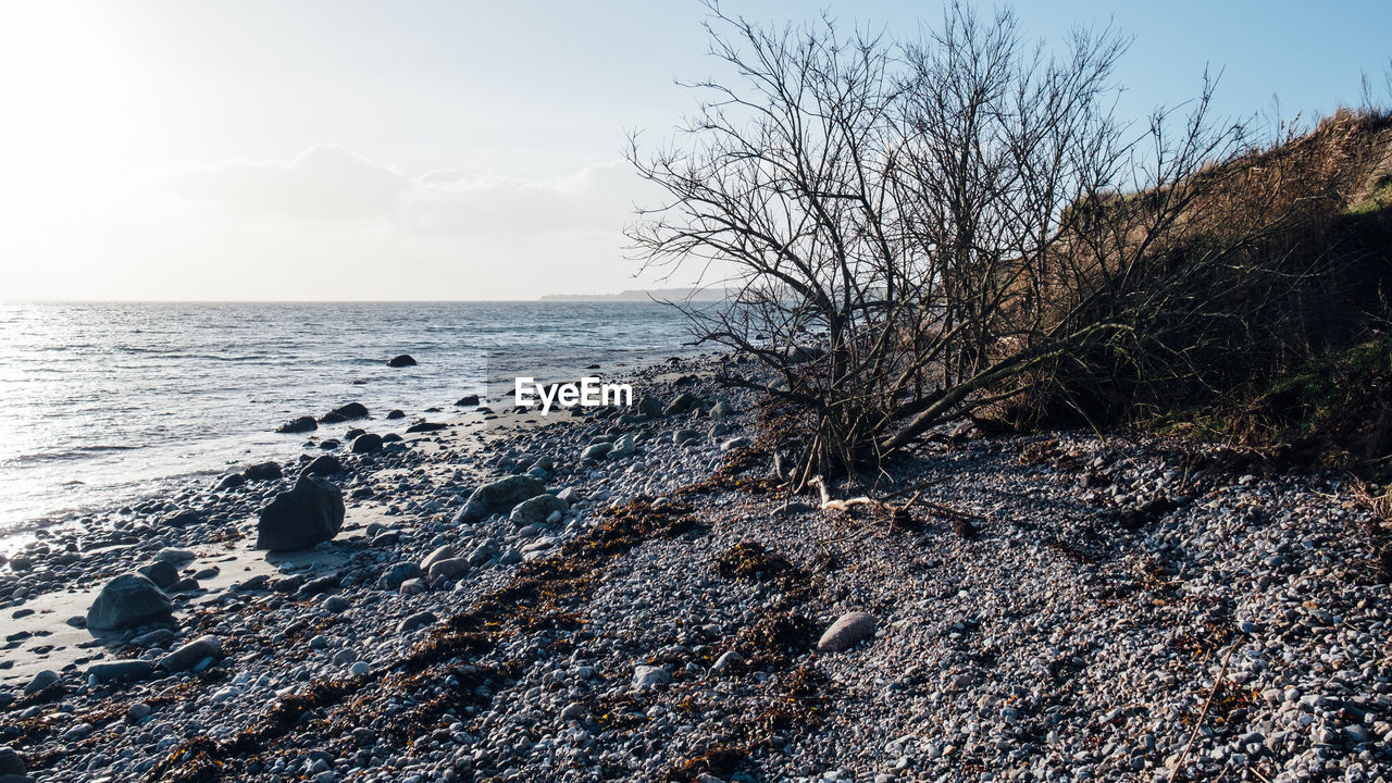water, sea, sky, rock, land, nature, beach, scenics - nature, horizon over water, rock - object, solid, beauty in nature, tranquility, horizon, tranquil scene, no people, tree, remote, outdoors, rocky coastline