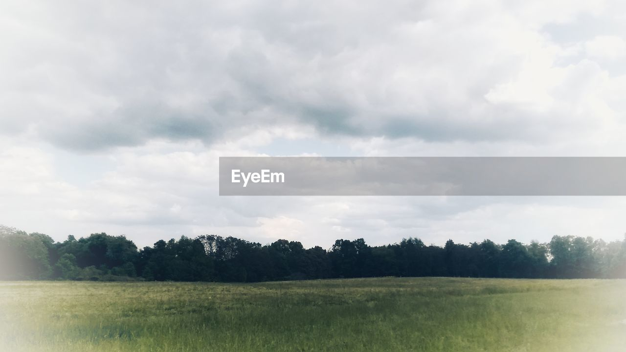 sky, landscape, cloud - sky, tranquil scene, tranquility, environment, plant, scenics - nature, beauty in nature, tree, field, land, nature, grass, day, non-urban scene, no people, growth, rural scene, green color, outdoors