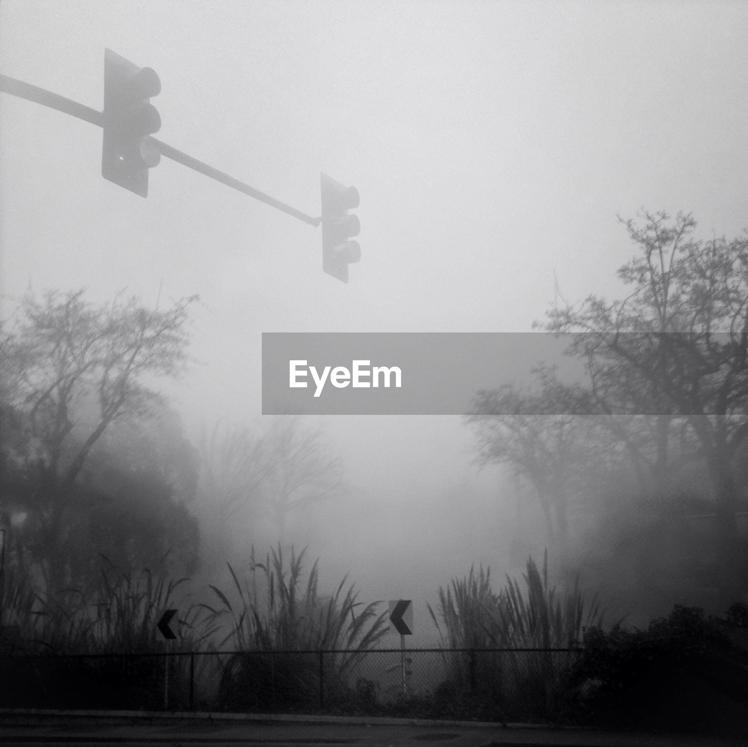 Traffic lights on foggy day